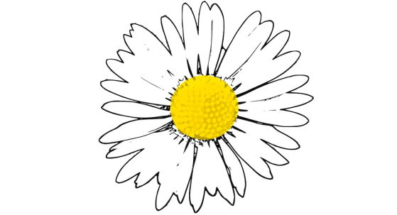 Featured image: The Bellis Perennis Poem - Anette Hermann