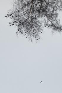 Bird Fall #2 Anette Hermann