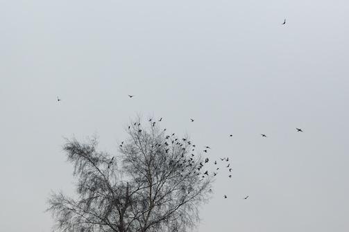 Bird Fall #5 Anette Hermann