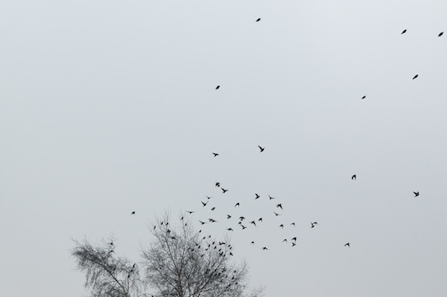 Bird Fall #6 Anette Hermann