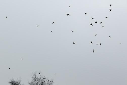 Bird Fall #7 Anette Hermann