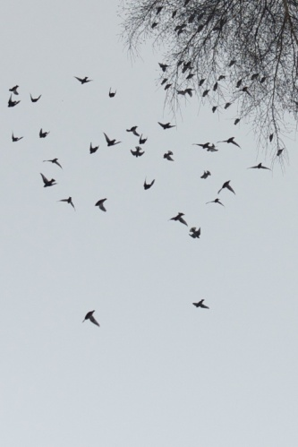 Bird Fall #8 Anette Hermann