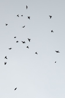 Bird Fall #9 Anette Hermann
