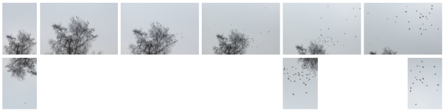 bird_fall